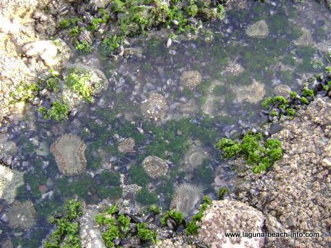 Tidepools at Thousand Steps Beach, 1000 Steps Beach, Laguna Beach, California