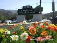 Canyon Animal Hospital, Veterinarian Services and Boarding, Laguna Beach Dog