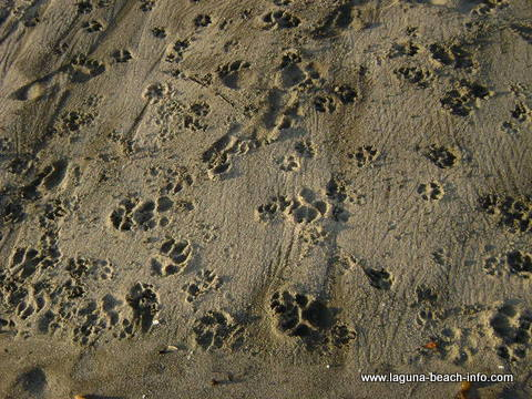Pawprints of Dog Friendly Laguna Beach beach, Laguna Beach, California Information