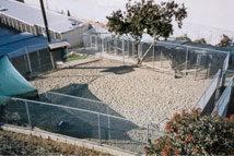 Coastal Kennels, Laguna Beach Dog Day Care and Boarding