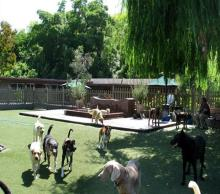 The Dog Ranch Bed and Biscuit, Laguna Beach Doggy Day Care and Boarding