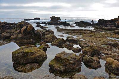 Laguna Beach: Source of much-needed restoration
