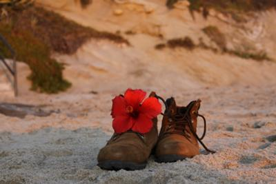 Shoe Flower Laguna Beach by Aja Fewell, Orange County, California