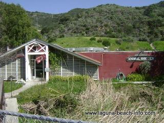 Laguna Beach Animal Shelter, Laguna Beach Dog
