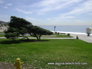 Windswept Tree and Grassy Area, Main Beach Laguna Beach
