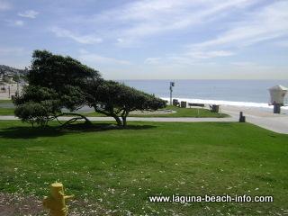 Windswept Tree and Grassy Area, Main Beach Laguna Beach