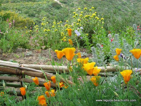 Hortense Miller Gardens, things to do in Laguna Beach