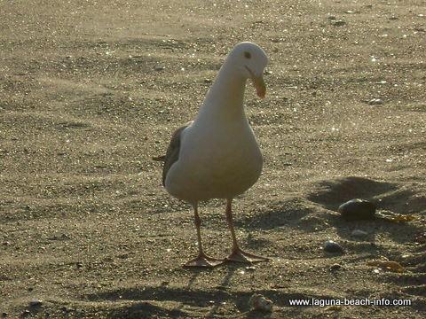 Table Rock Beach in Laguna Beach, California